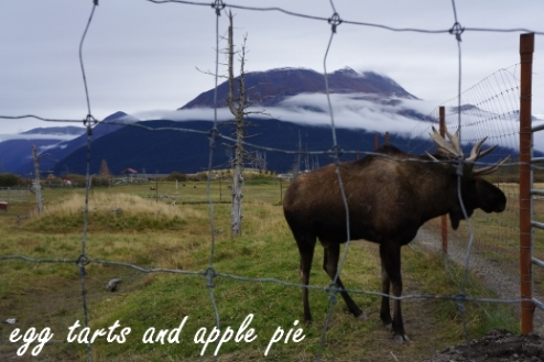 Alaska AWCC - Moose