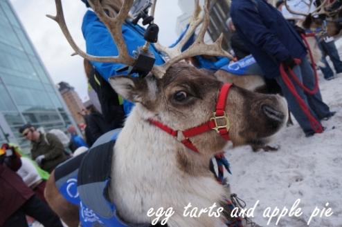 Reindeer Run 16 - Reindeer