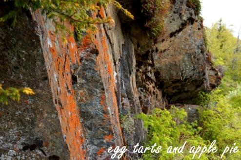 Rainbow - Lichen